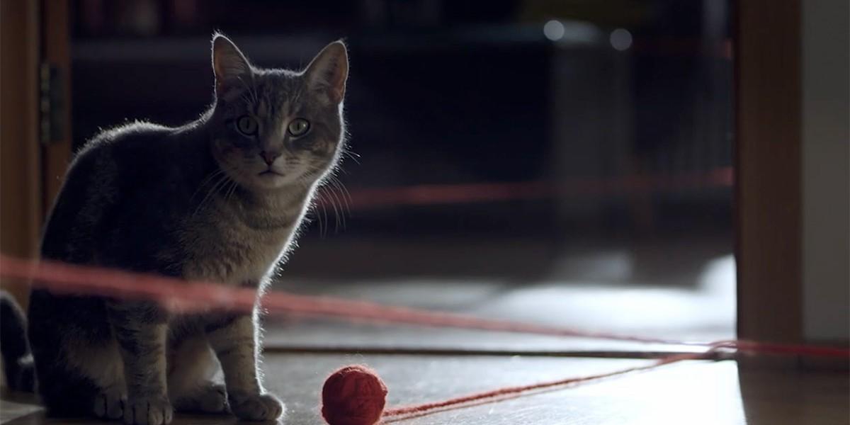 Sjova | The Cat