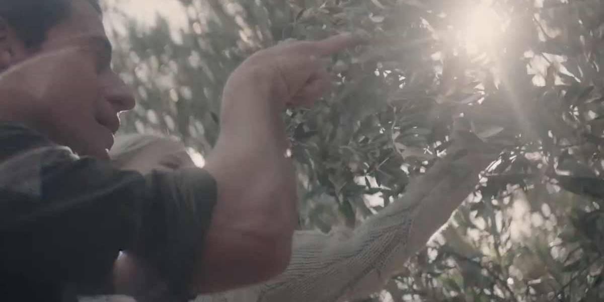 Olive Grove | The Gatherer