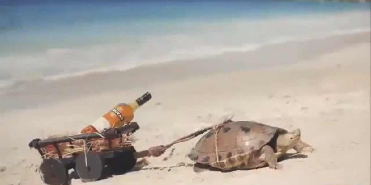 Cruzan   The Don't Hurry Rum