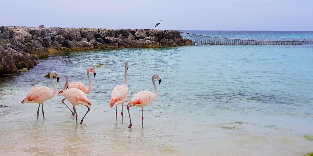Aruba | Location
