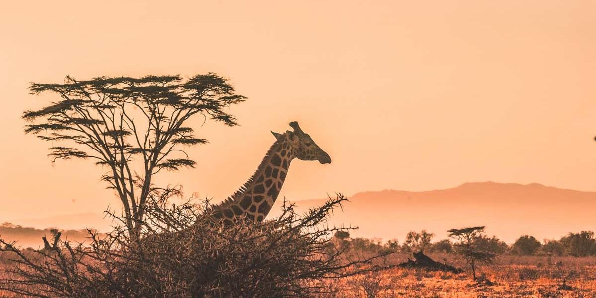 Kenya | Location
