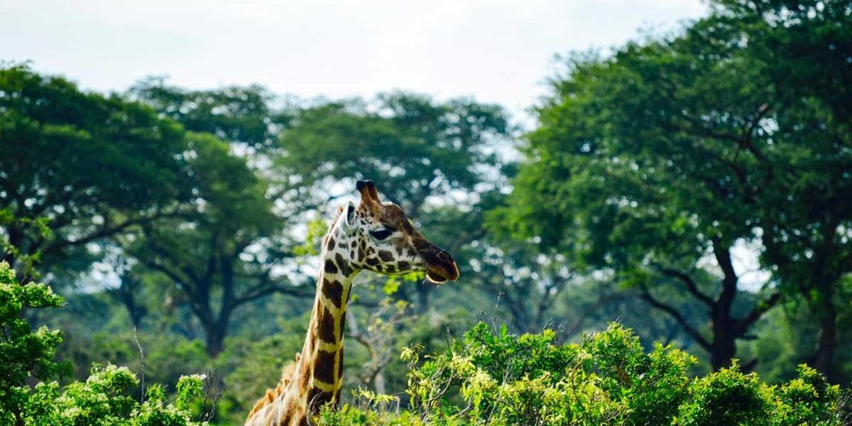 Uganda | Location